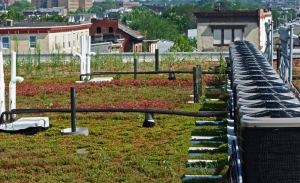 Green_roof_2_for_web